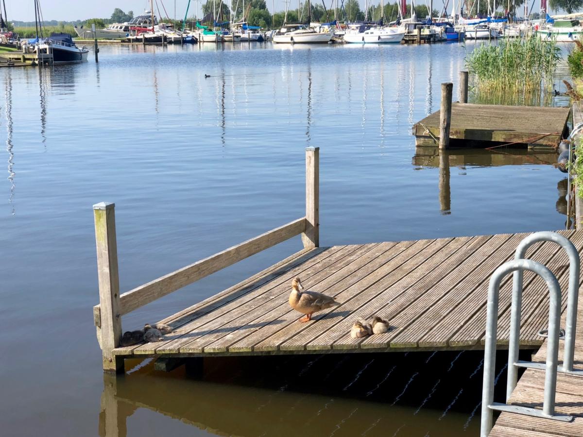 Zwemtrap aan de Steiger van vakantiehuis aan de friese meren