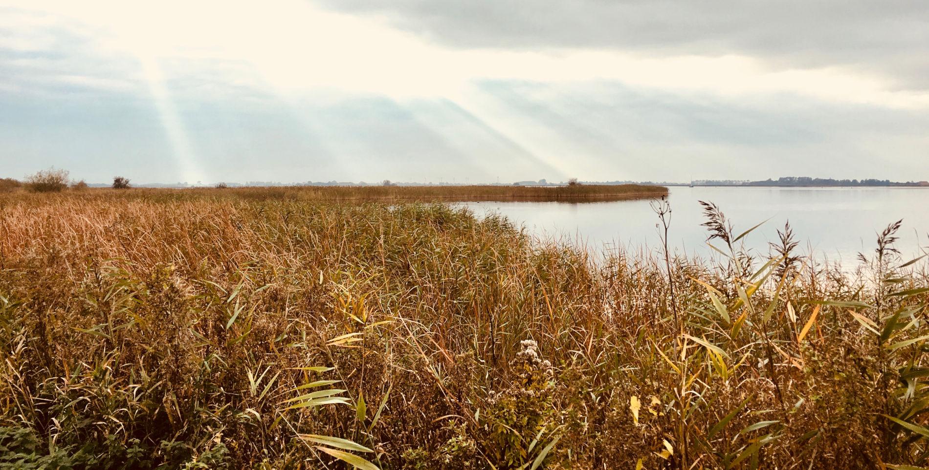 Riet bij de Morra in de omgeving van vakantiewoning Aquaholic aan het water in Friesland