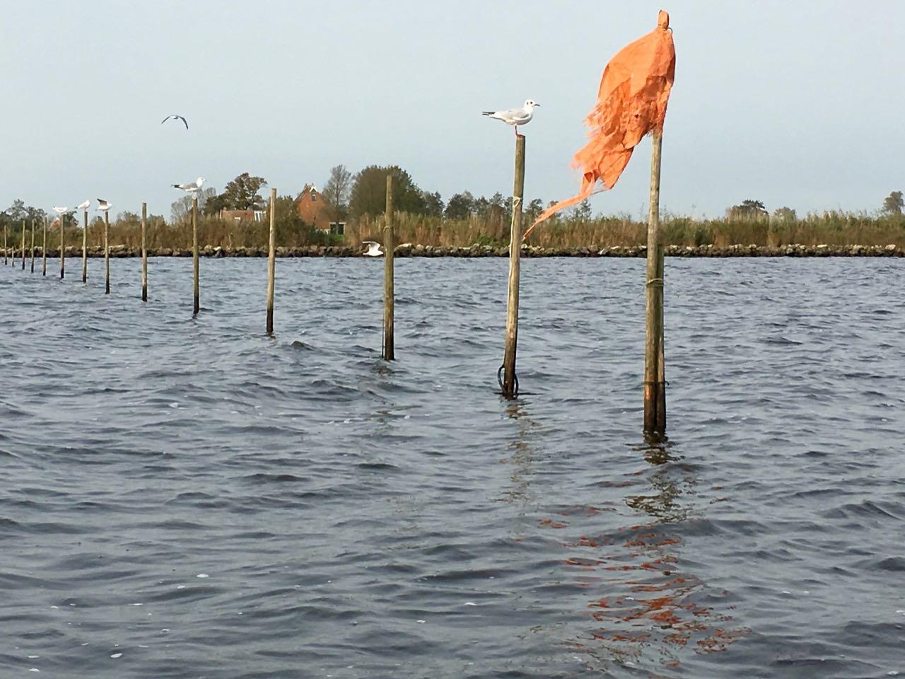 Fuiken zeiltocht vanuit vakantiehuis aan het water in Friesland