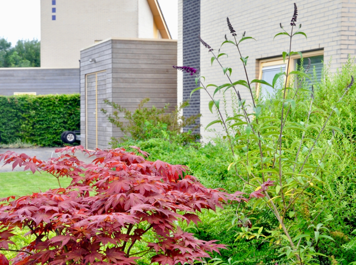 Voorkant tuin met vlinderstruik vakantiehuis aan het water in Friesland